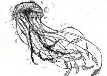 Dibujo de medusa