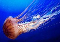 Tratamiento medusa