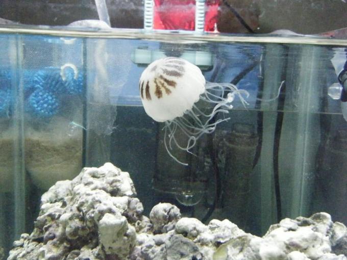 Acuarios para medusas
