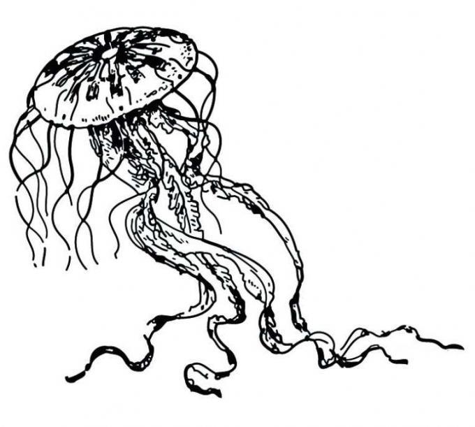 dibujos-de-medusas
