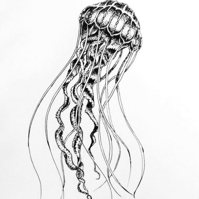 Dibujos de medusas