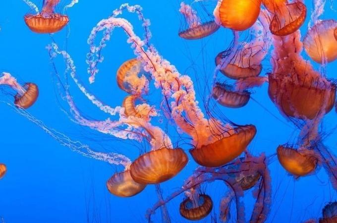 Fotos de medusas
