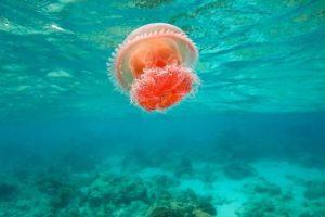 Hábitat de las medusas
