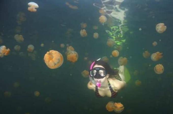 Toxicidad de las medusas
