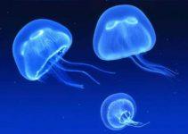 Movimiento de las medusas