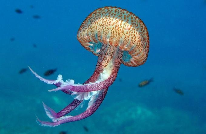 Medusas luminiscentes