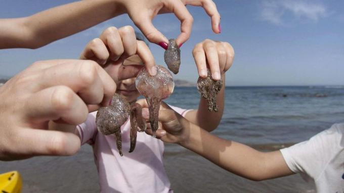 Prevención para las picaduras de medusas