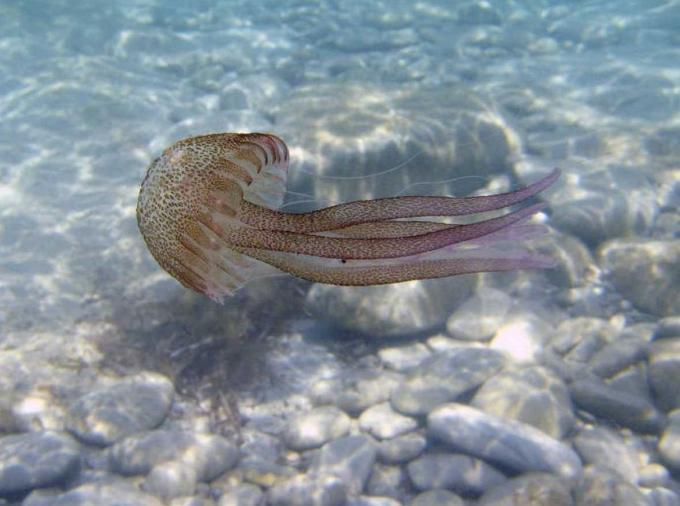Respiración de las medusas, imágenes